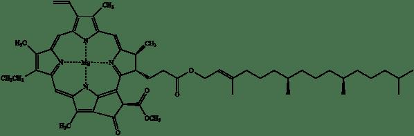 chlorophyll01