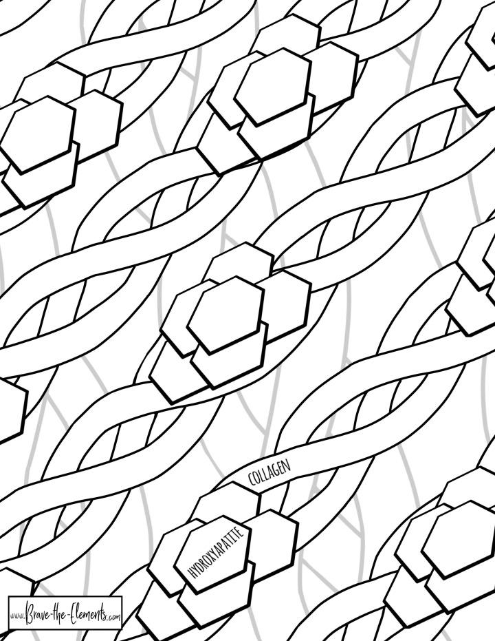Bone biomineralization coloring page